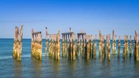 Wood pilings med havsikter för blå himmel Royaltyfri Fotografi