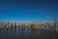 Wood pilings med havsikter för blå himmel Royaltyfria Bilder