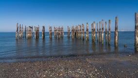 Wood pilings med havsikter för blå himmel Royaltyfri Foto