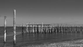 Wood pilings med svartvita bakgrunder för havsikter Royaltyfri Foto