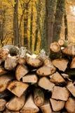 wood, pilot na pokładzie fotografia royalty free