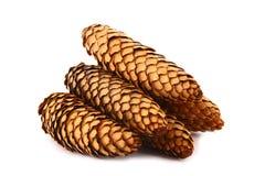 Wood pine fir cones Stock Photography
