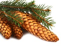 Wood pine fir cones stock images