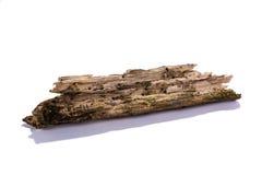 Wood pinne för förfall Royaltyfri Foto