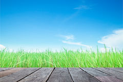 Wood plank with green grass field and sky Royalty Free Stock Photo