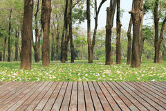 Wood planks floor and green garden Stock Photos