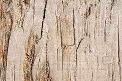 Wood planks, texture with natural pattern Stock Photos