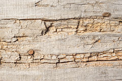 Wood planks, texture with natural pattern Royalty Free Stock Images