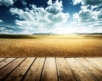 Wood platform and barley  hills Tuscany Royalty Free Stock Photo