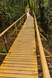 Wood platform trail through the rain forest Royalty Free Stock Image