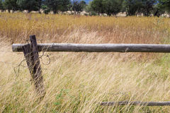 Wood pole fence with long yellow grass Stock Photo