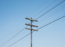 Wood Poles. For power transmission Stock Photos