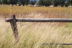 Wood polstaket med långt gult gräs Arkivfoto