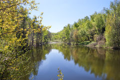 Wood pond. Pond on the wood covered bank. The pure blue sky stock images
