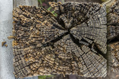 Wood Post. The top of a worn, wooden post stock photos