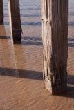 Wood Posts in Great Salt Lake Royalty Free Stock Photos