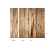 Wood prövkopia av pilträ, Ramin, Ek-rött och inkvarterad ek Royaltyfria Bilder