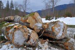 Wood preparation Stock Photography