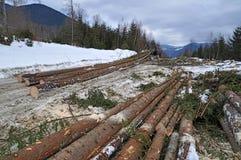 Wood preparation Stock Image