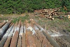 Wood preparation Stock Photo
