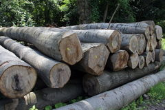 Wood preparation Royalty Free Stock Images