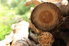 The wood prepared to burn. Royalty Free Stock Photos