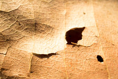 Wood pulp and hole on dried leaves. Stock Image