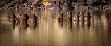 Wood Pylons in an Idaho river Royalty Free Stock Photography
