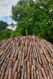 Wood pyre of pine logs. Wood pyre being prepared for the creation of charcoal from pine logs in Vinales, Cuba stock photos