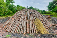 Wood pyre of pine logs. Wood pyre being prepared for the creation of charcoal from pine logs in Vinales, Cuba royalty free stock images