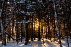 Wood in Quebec stock photo