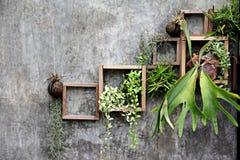 Wood ram med någon växt på väggen royaltyfri bild