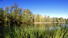Wood is reflected in the lake. In a sunny day stock footage