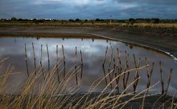 Wood reflexion i vattnet Arkivbilder