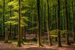 Wood on Rügen, Germany Royalty Free Stock Photography