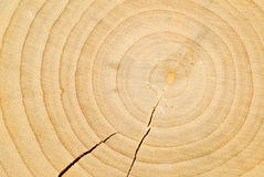 Wood Rings Royalty Free Stock Image