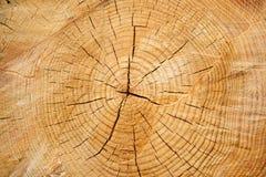 Wood rings Stock Photo