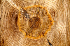 Wood rings background texture Stock Photography