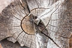 Wood rings texture, cracked wooden cut. Background, old wooden concept Stock Photography