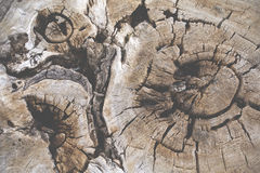 Wood rings in a trunk Royalty Free Stock Images