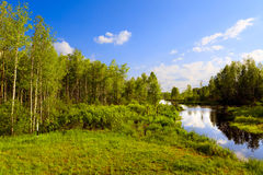 The wood river Royalty Free Stock Photos