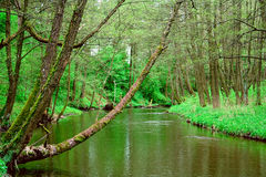 The wood river. Wood river water green trees Royalty Free Stock Photography