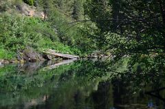 The Wood river head waters comes up in Jackson Kimball State Park, Oregon and flows down to Agency Lake. It is well known for. Trout fishing and kayaking royalty free stock photography