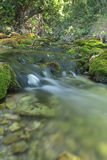 Wood River in summer. Wood River in summer, passing by the  term of Paterna del Madera, Albacete, Spain. Vertical capture with green tones Royalty Free Stock Photography