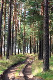 Wood road. Sandy (country roads, rural) road through the pine forest Royalty Free Stock Photography