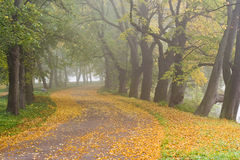 Wood Road. Fall. A Fog. Royalty Free Stock Images