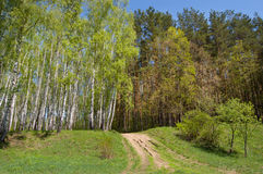 Wood road on a hill. Wood road on the hill covered with a grass royalty free stock images