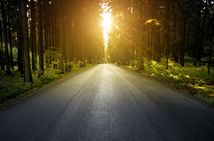 Wood road. Path through the woods at sunset Royalty Free Stock Photos