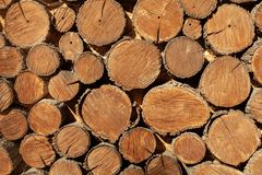 Wood round timber background close up. wooden pattern. Wood round timber background close up. Natural wooden pattern royalty free stock images