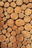 Wood round timber background close up. wooden pattern. Wood round timber background close up. Natural wooden pattern stock image